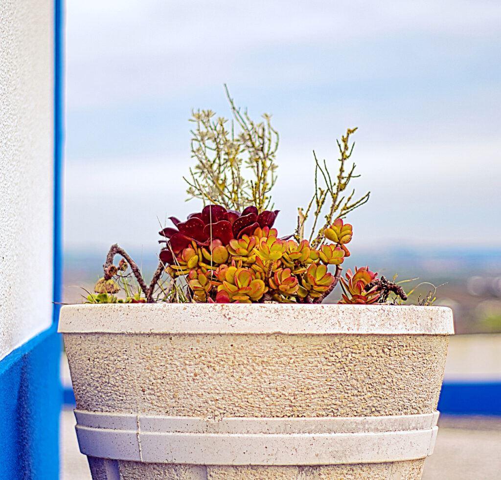 Blumentöpfe aus Beton - Ekogarden.de