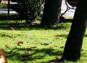 Ein rustikaler Garten